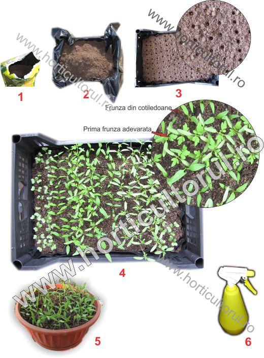 Fig. 1  Producerea rasadurilor de legume, flori