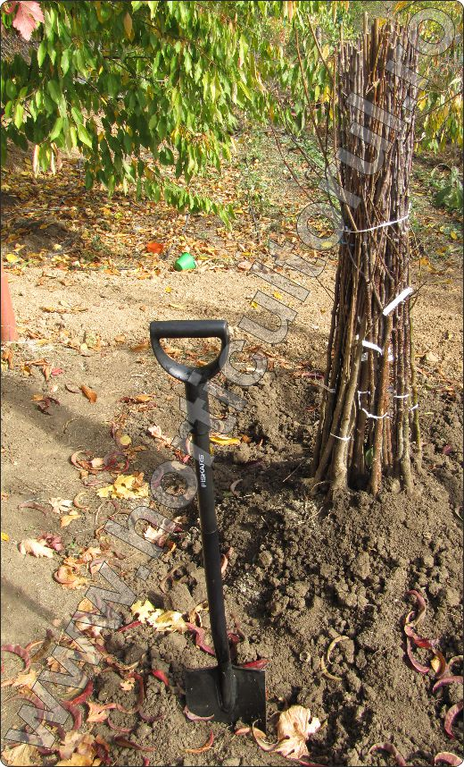 Plantarea-pomilor-fructiferi-toamna-iarna-primavara