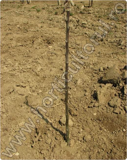 Plantarea-pomilor-pe-teren-desfundat.