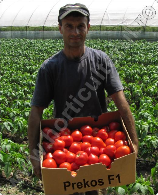 Prekos-Horticultorul Gigel Pantofaru-Varasti-Ilfov