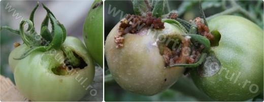 Omida fructelor