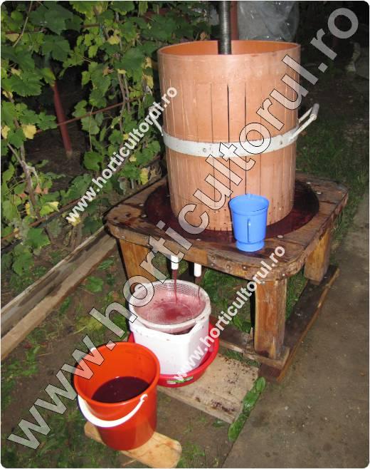 vinificarea strugurilor rosii