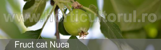 tratamente-de-primavara-fruct-cat-nuca