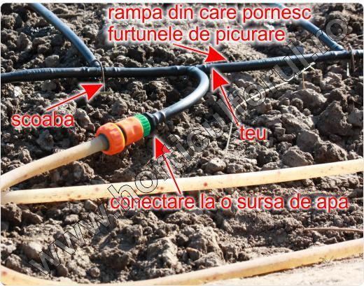 Irigarea legumelor prin picurare_conectare_furtun