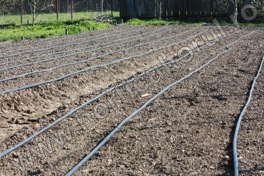 Irigarea legumelor prin picurare_gradina_1