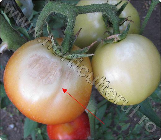 Arsura solara la Tomate -Rosii_1