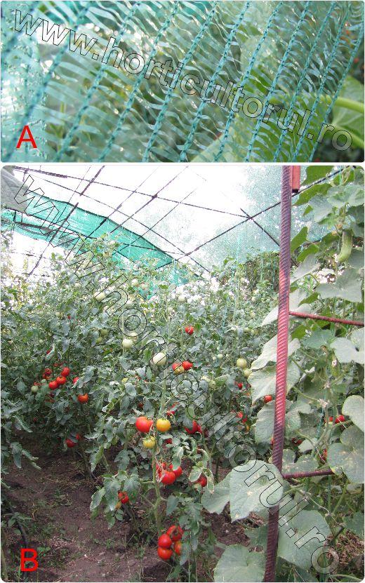 Protectia-impotriva-Arsurii-solare-la-Tomate-Rosii_plasa-de-umbrire