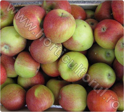 Soiul de mar_Braeburn_apple
