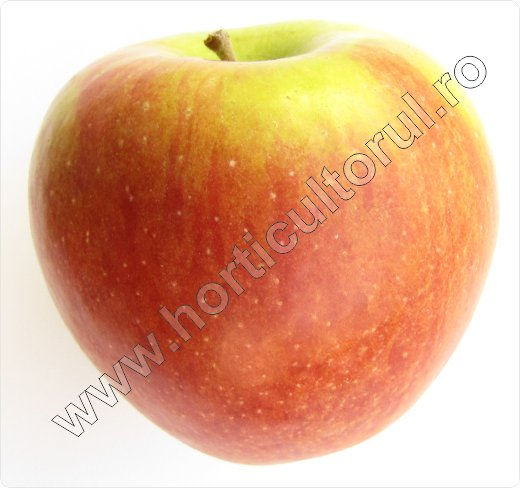 Soiul de mar_Braeburn_apple_1