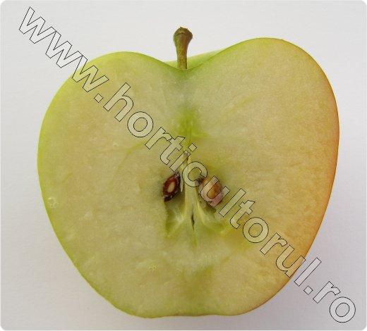 Soiul de mar_Braeburn_sectiune_apple_2