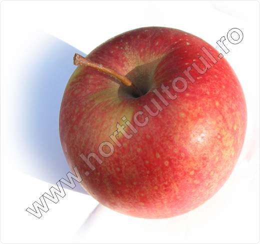 Soiul de mar_PINOVA_Pinata_Sonata_Corail_apple_2