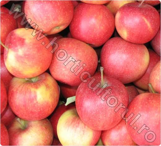Soiul de mar_PINOVA_Pinata_Sonata_Corail_apple_3