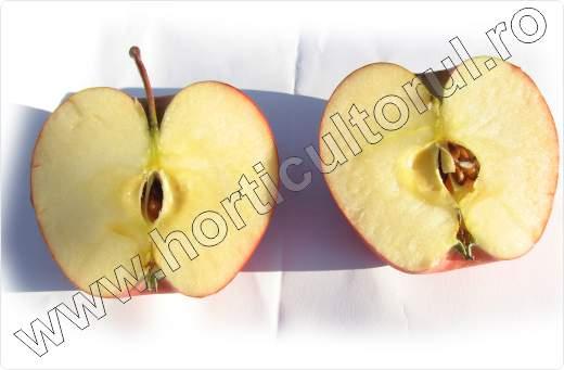 Soiul de mar_PINOVA_Pinata_Sonata_Corail_apple_4