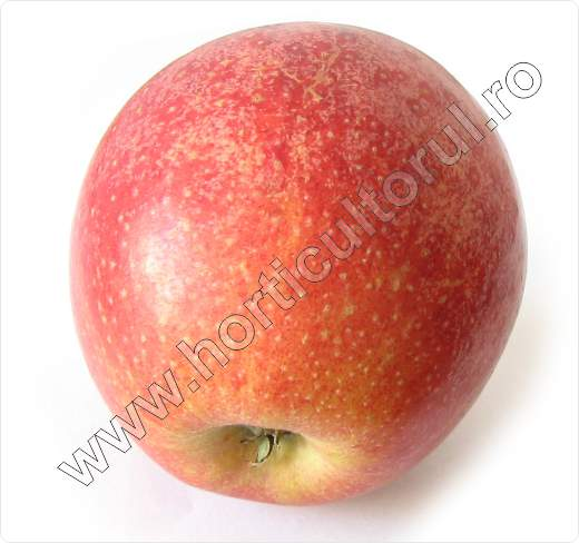 Soiul de mar_Royal Gala_apple_2