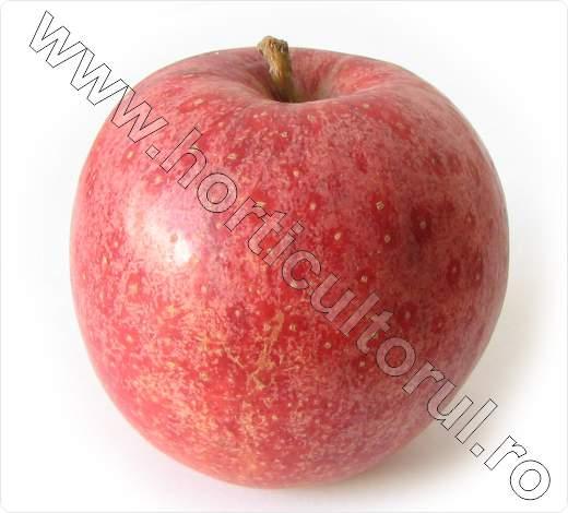 Soiul de mar_Royal Gala_apple_3