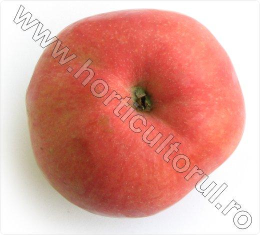 Soiul de mar_Wagener premiat_apple_4
