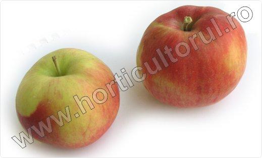 Soiul de mar_Wagener premiat_apple_5