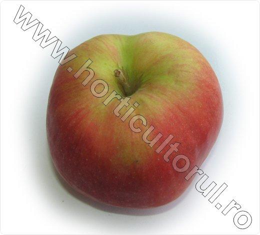 Soiul de mar_Wagener premiat_apple_7