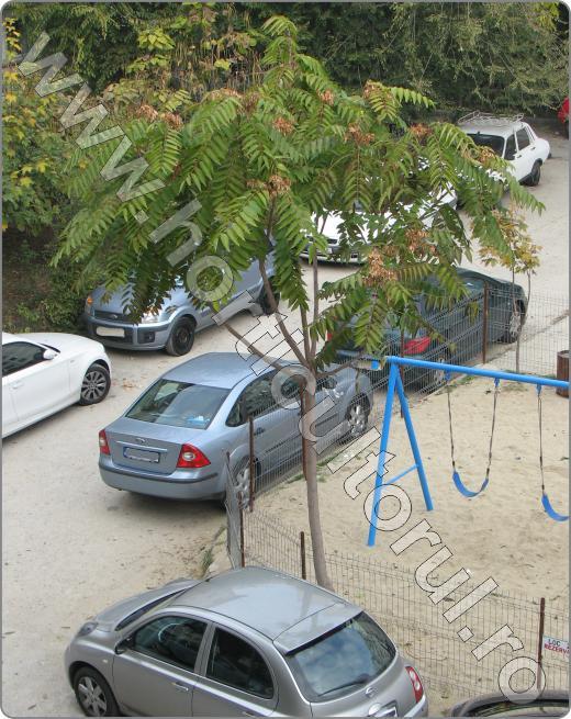 Cenuser, Otetar fals (Ailanthus altissima)