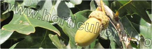 Arboricultura-dendrologie