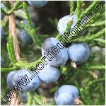 Ienupar de Virginia-Juniperus virginiana