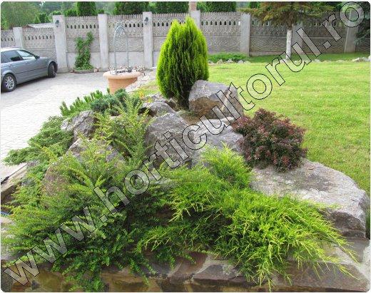 Juniperus-chinensis-Pfitzeriana-Aurea