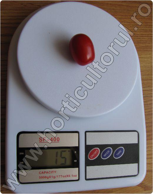 Tomate-Japoneze-Tokita-Sungrape
