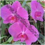 Secretele Orhideelor