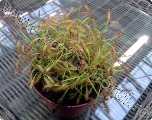 plante carnivore intretinere