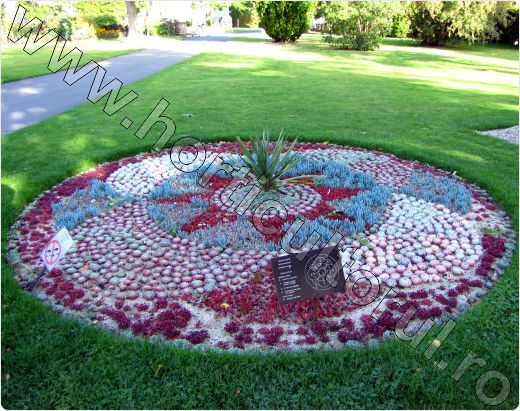 Crassula-mozaic floral