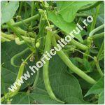 Fasolea de gradina-Phaseolus vulgaris