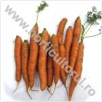 Morcovul-Daucus carota