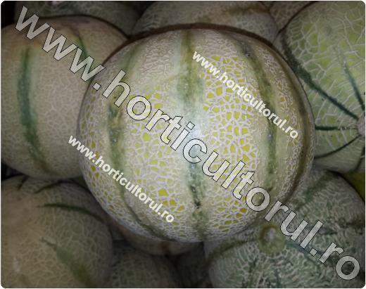 Pepene galben-Cucumis melo