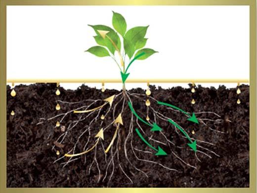 planta Vivema
