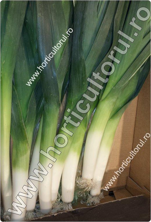 Praz-Allium porrum