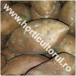 Batatul - Cartoful dulce