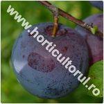 Prunul japonez - Prunus salicina