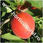 Caisul-Prunus armeniaca