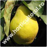 Gutuiul-Cydonia oblonga