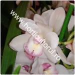 Cymbidium-Orhideea barca