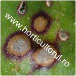 Cercosporioza sfeclei-Cercospora beticola