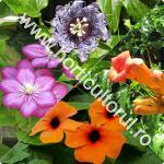 5 plante cataratoare pentru gradina