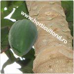 Papaya- Fructul ingerilor