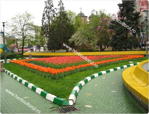 Cultivarea lalelelor in  parcuri