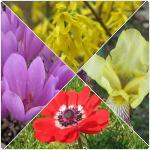 Flori de primava ce infloresc la inceputul primaverii