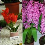Flori de primavara in ghiveci_150