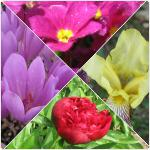 Flori de primavara in gradina
