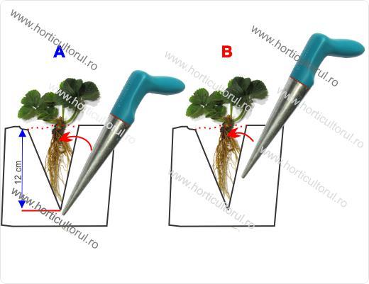 Plantarea capsunilor primavara cu plantatorul