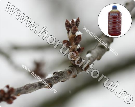 Zeama sulfocalcica-Tratamente de Iarna