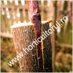 Altoirea pomilor in despicatura